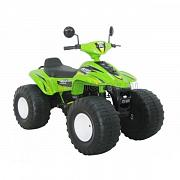 Chien Ti Big Beach Racer (CT-658)